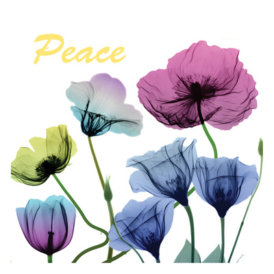 Floral Rainbow Peace Prints by Albert Koetsier