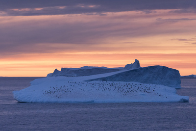 Penguins Float on an Iceberg under the Midnight Sun Just Outside Deception Island Photographic Print by Jeff Mauritzen