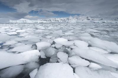Sea Ice Floats in Fournier Bay, Antarctica Photographic Print by Jeff Mauritzen