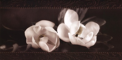 Soft Magnolias I Print by Christine Elizabeth