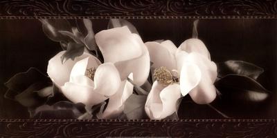 Soft Magnolias II Posters by Christine Elizabeth