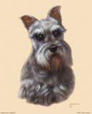 Schnauzer Prints by Judy Gibson