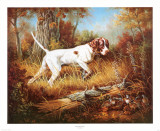 Pointer with Quail Posters by Judy Gibson