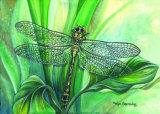 Dragonfly II Posters by Kym Garraway