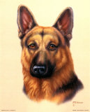 German Shepherd Prints by Judy Gibson