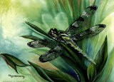Dragonfly I Prints by Kym Garraway