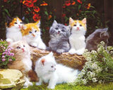 Baby Cats Posters