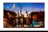 Zwanen met olifanten als spiegelbeeld in het water, ca.1937 Foto van Salvador Dali