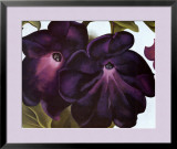 Black and Purple Petunias Posters by Georgia O'Keeffe