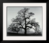 Oak Tree, Sunset City, California, 1932 Poster by Ansel Adams