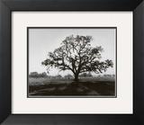 Oaktree, Sunrise Posters by Ansel Adams