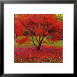 Acer Prints by Bent Rej