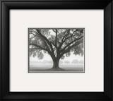 Silhouette Oak Prints by William Guion