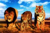 Wildkatzen Kunstdruck
