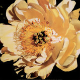 Yellow Peony Prints by Jennifer Harmes