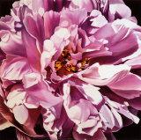 Peonía rosa Pósters por Jennifer Harmes