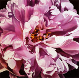 Pink Peony Posters by Jennifer Harmes
