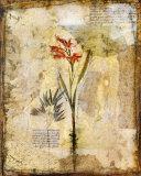 Dans les Jardine I Prints by John Douglas