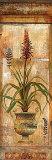 Rojo Botanical II Poster by John Douglas