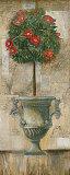 Grecian Bloom II Posters by  Augustine (Joseph Grassia)