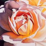 White Rose Print by Jennifer Harmes