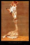 Det første kysset Poster