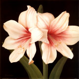 Contemporary Lily I Prints by Gloria Eriksen