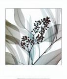 Verde eucalipto Stampe di Steven N. Meyers