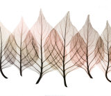 Celosía de hojas Póster por Steven N. Meyers