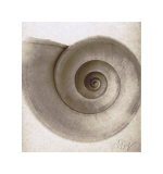 Snail Shell Poster by Mandolfo 
