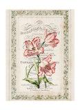 Botanical Cabinet Prints by Zachary Alexander