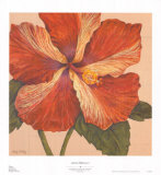 Island Hibiscus I Poster by Judy Shelby