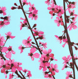 Cherry Tree Blossom Print by Christophe Szkudlarek