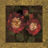 Red Camellias II Plakater af John Seba