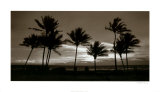 Sunrise Palms Prints by Harold Silverman
