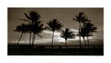 Sunrise Palms Prints by Harold Silverman
