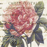 Carte Postale Rose III Prints by Paula Scaletta