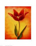 Tulip I Prints by Christine Zalewski
