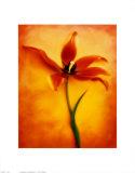 Tulip II Posters by Christine Zalewski