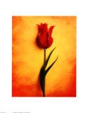 Tulip III Art by Christine Zalewski