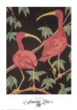 Scarlet Ibis I Posters par Dan Goad