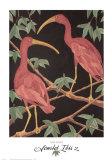 Scarlet Ibis II Prints by Dan Goad