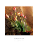 Tulip Reflection Print by Susan Friedman