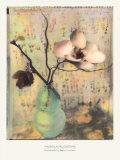 Magnolienblüten Poster von Susan Friedman