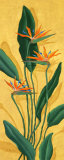 Bird of Paradise Posters by Paul Brent
