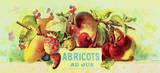 Abricot au Jus Art