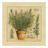 Herbes de Provence, Romarin Poster by Pascal Cessou