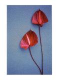 Flower Power II Posters