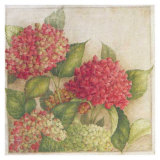 Hortensia II Prints by Vincent Jeannerot