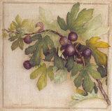 Branche de Figuier II Prints by Vincent Jeannerot